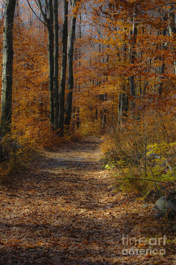 Fall Path Photograph  - Fall Path Fine Art Print