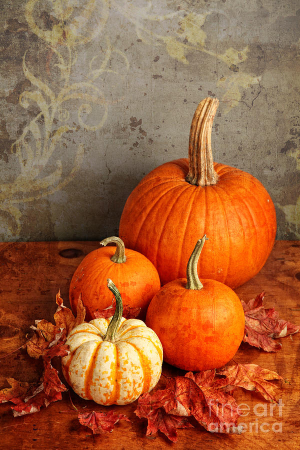 Image result for autumn pumpkin art
