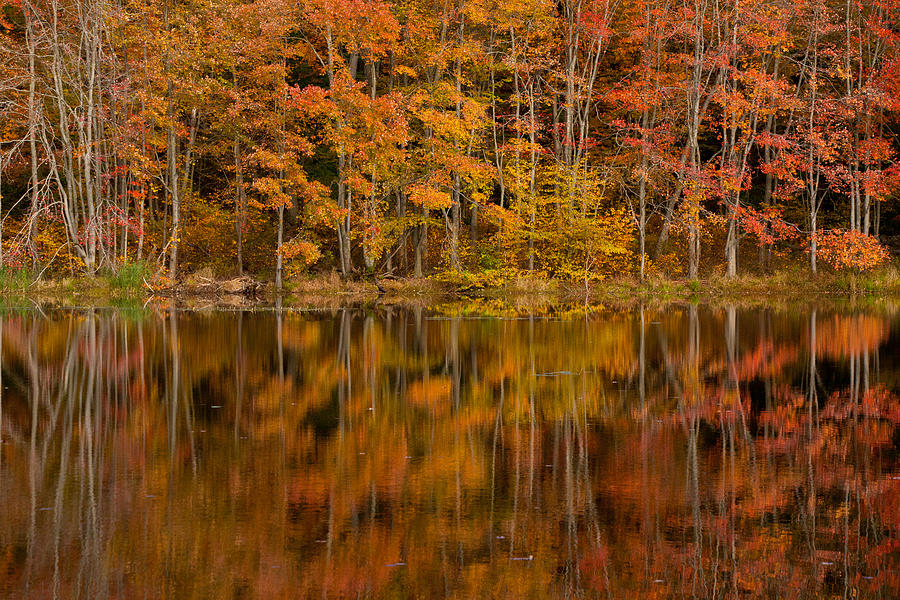 Fall Reflection Photograph  - Fall Reflection Fine Art Print