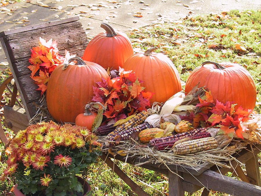Fall Scene Photograph