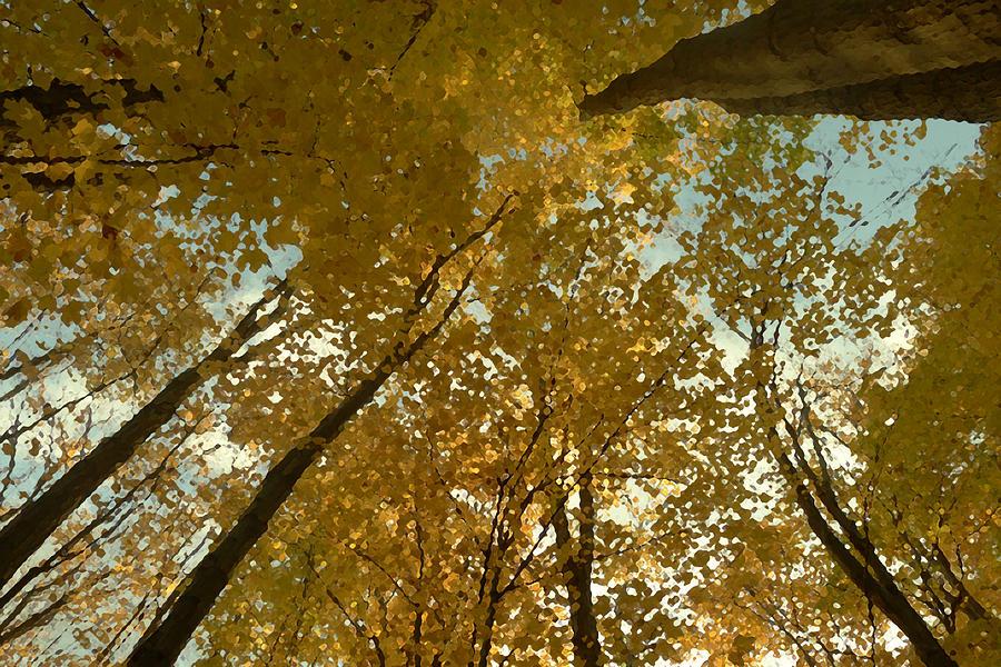 Yellow Photograph - Fall Scene by Tom Bush IV