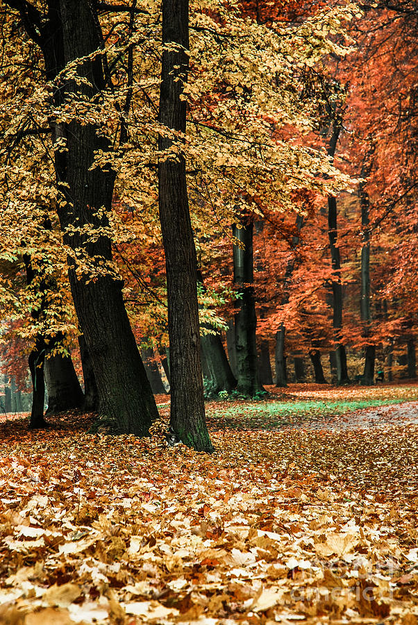 Autumn Photograph - Fall Scenery by Hannes Cmarits