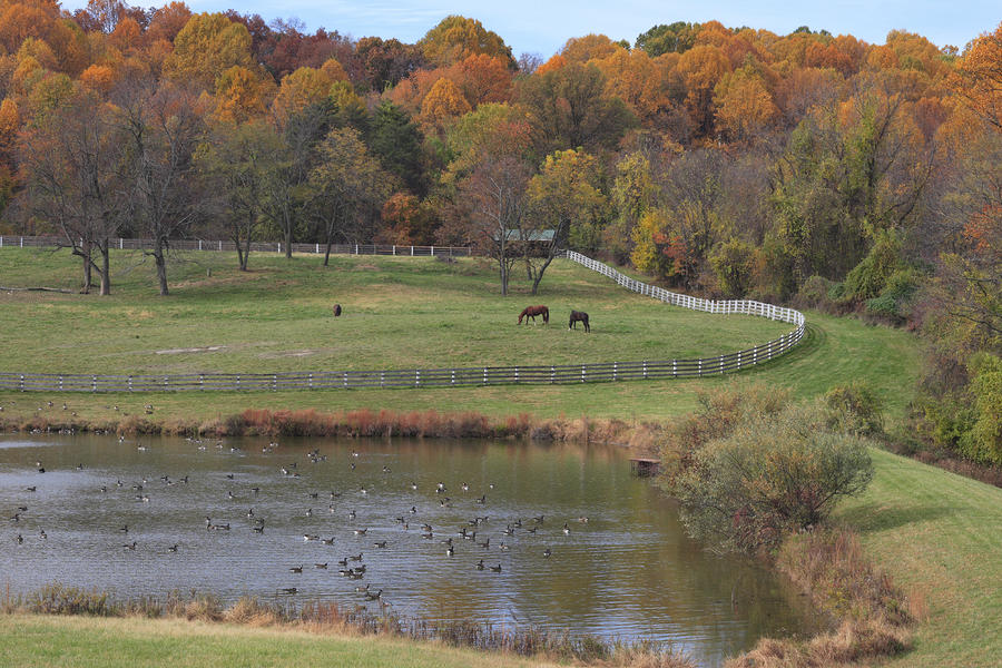 Fall Scenic Of Horse Farm And Pond Photograph By George Grall
