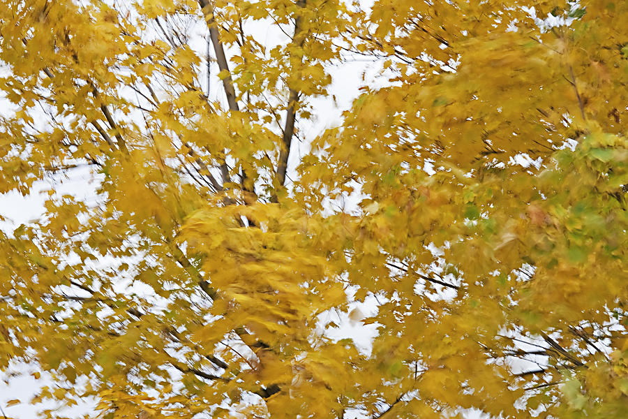 Fall Wind 2 Photograph