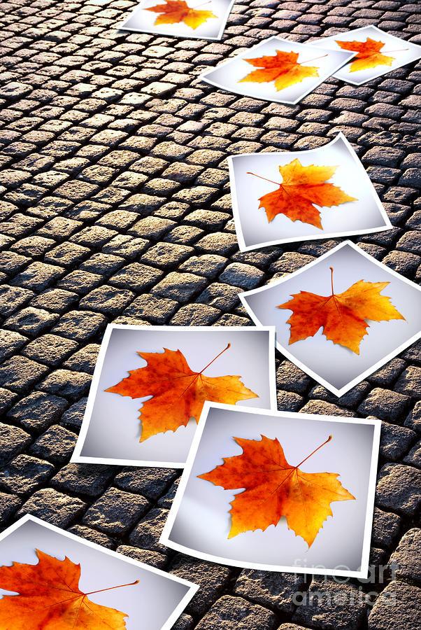 Fallen Autumn  Prints Photograph