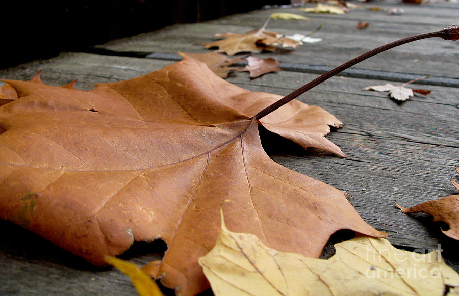Fallen Leaf Photograph