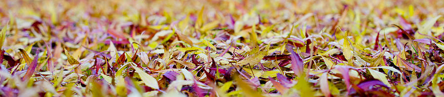 Fallen Willow Tree Leaves Photograph  - Fallen Willow Tree Leaves Fine Art Print