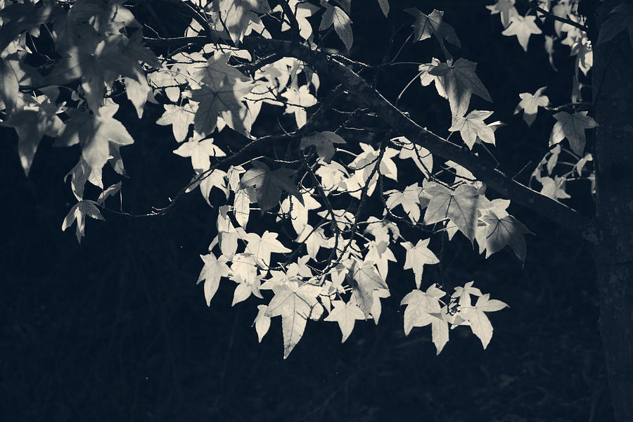 Falling Stars Photograph