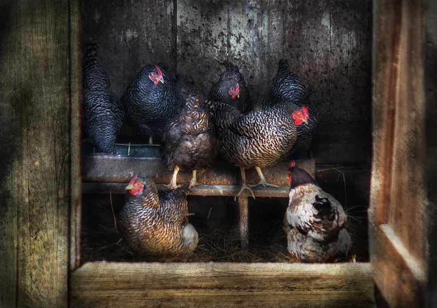 Farm - Chicken - The Hen House Photograph  - Farm - Chicken - The Hen House Fine Art Print