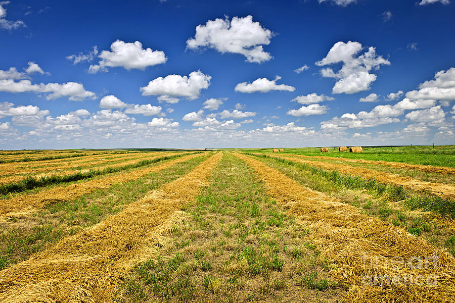 Farm Field At Harvest In Saskatchewan Photograph  - Farm Field At Harvest In Saskatchewan Fine Art Print