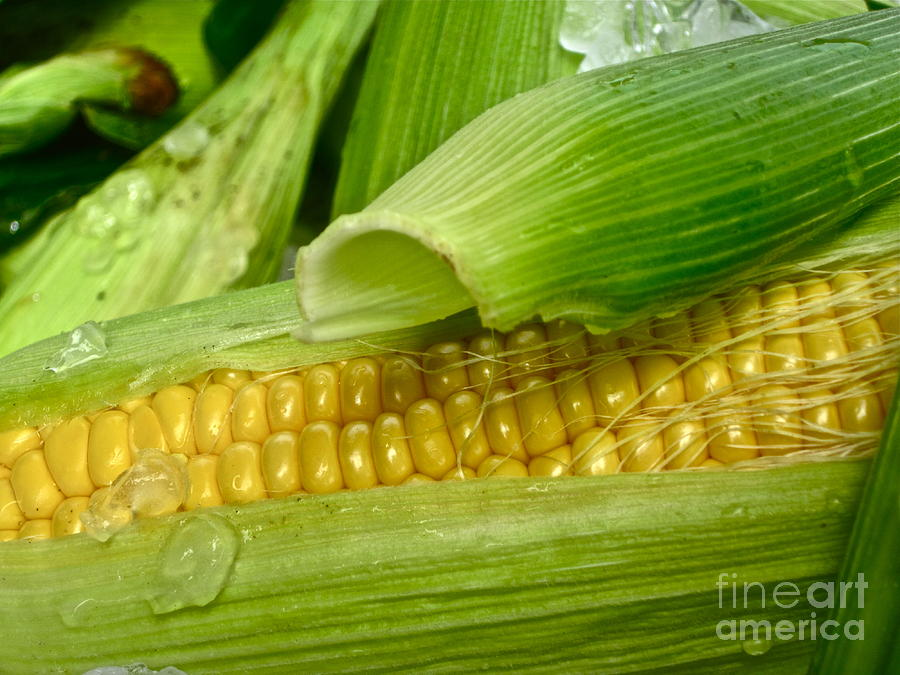 Farm Fresh Photograph  - Farm Fresh Fine Art Print