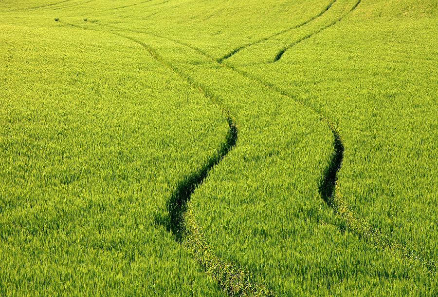 Tracks Photograph - Farm Tracks by Mike  Dawson