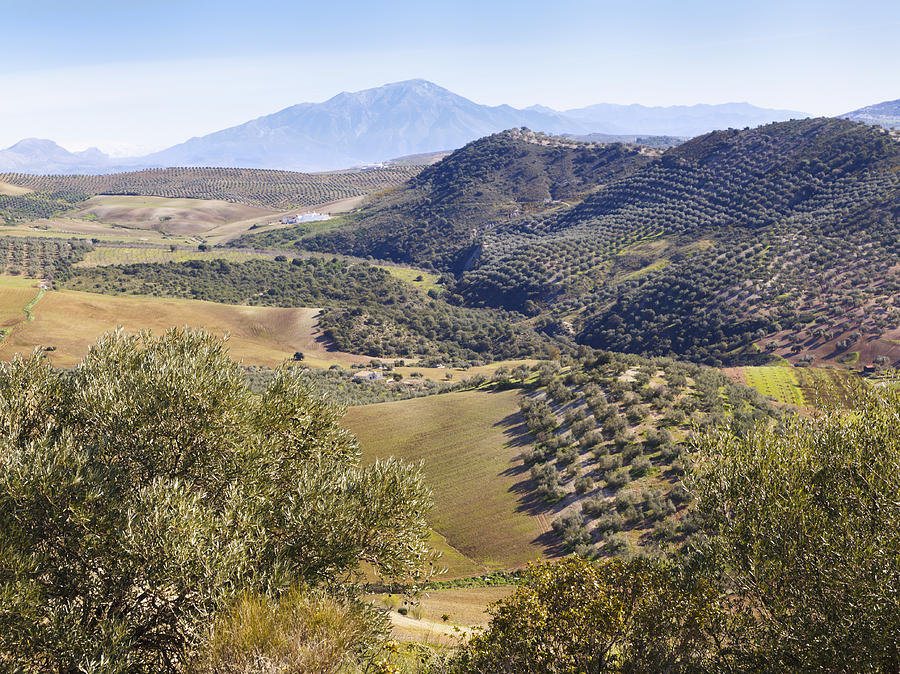 Farmland Near Casabermeja, Spain. Photograph