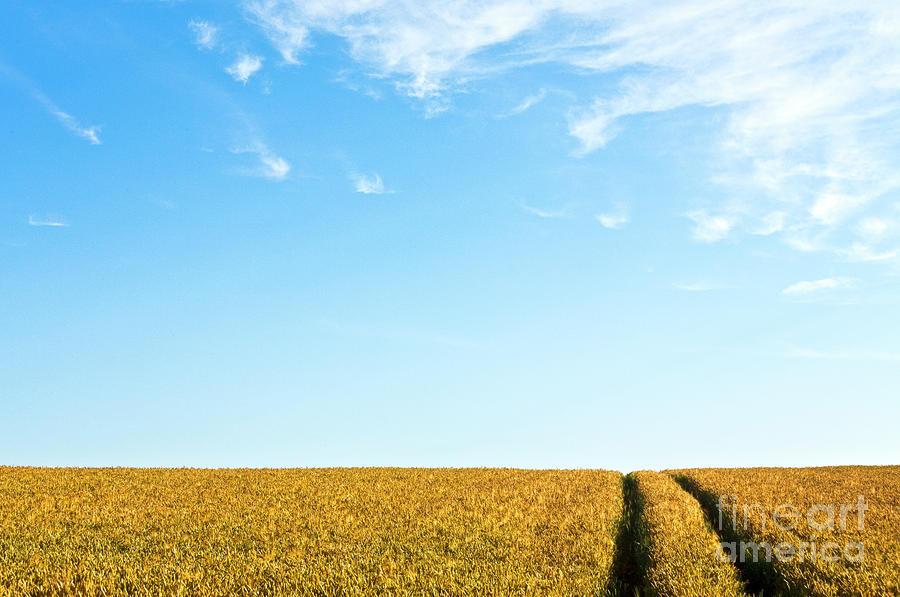 Farmland To The Horizon 1 Photograph