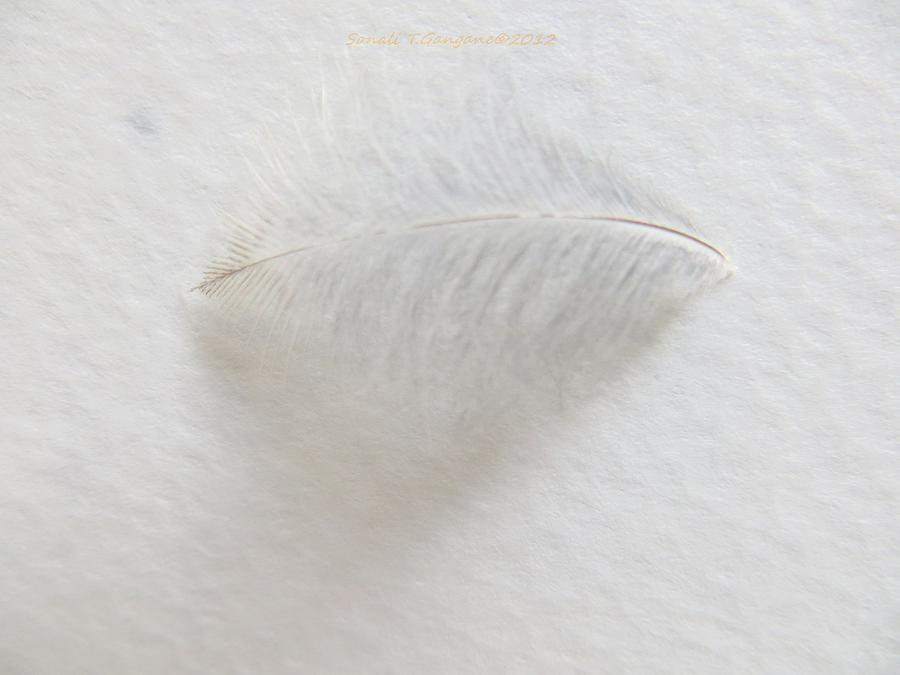 Feather Touch Photograph  - Feather Touch Fine Art Print