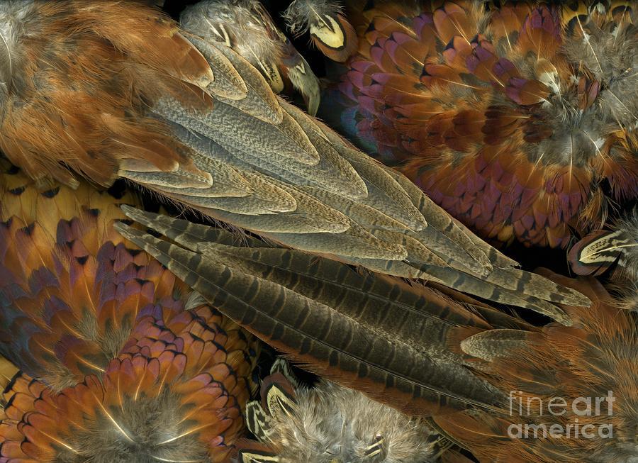 Featherdance Photograph