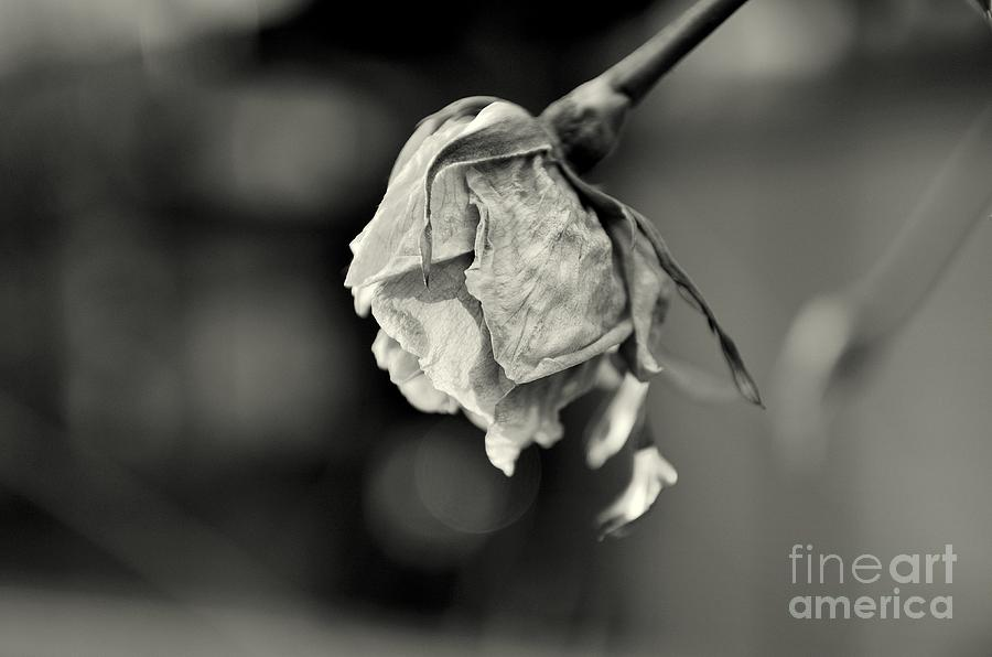 February 15th Photograph  - February 15th Fine Art Print