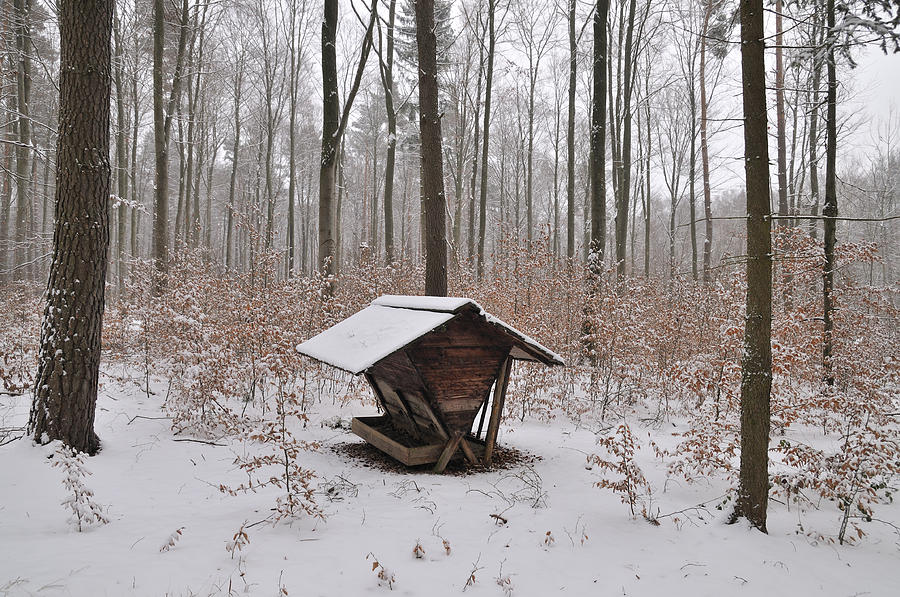Feed Box In Winterly Forest Photograph  - Feed Box In Winterly Forest Fine Art Print