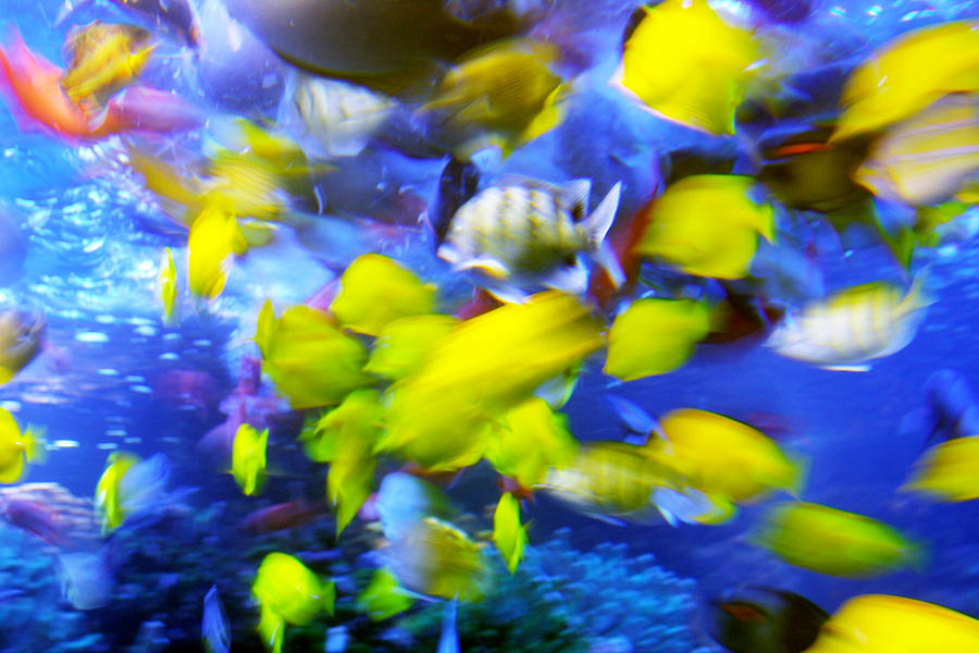 Water Photograph - Feeding Frenzy by Linda Phelps