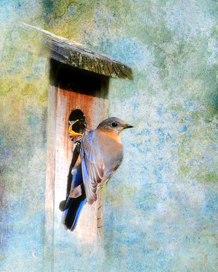 Female Eastern Bluebird At Nesting Box Photograph