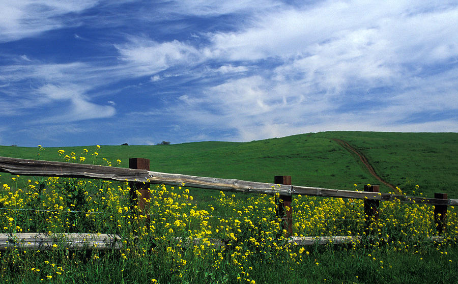 Landscapes Photograph - Fence And Flowers by Kathy Yates