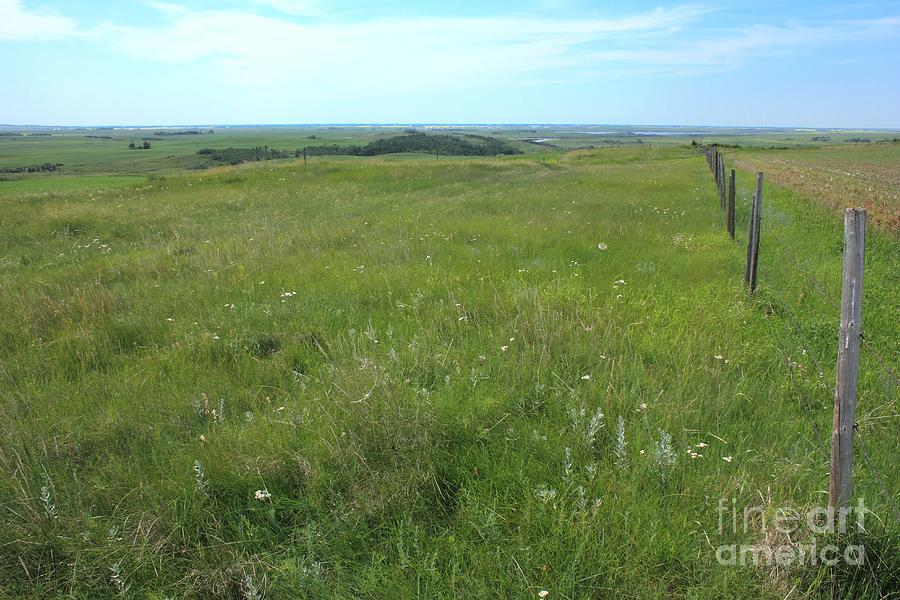 Fence On The Alberta Prairie Photograph