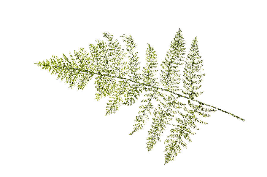 Fern Botanical Drawing...