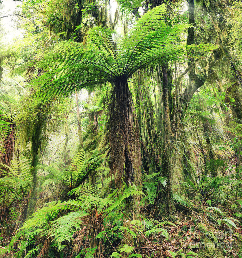 Fern Tree Photograph