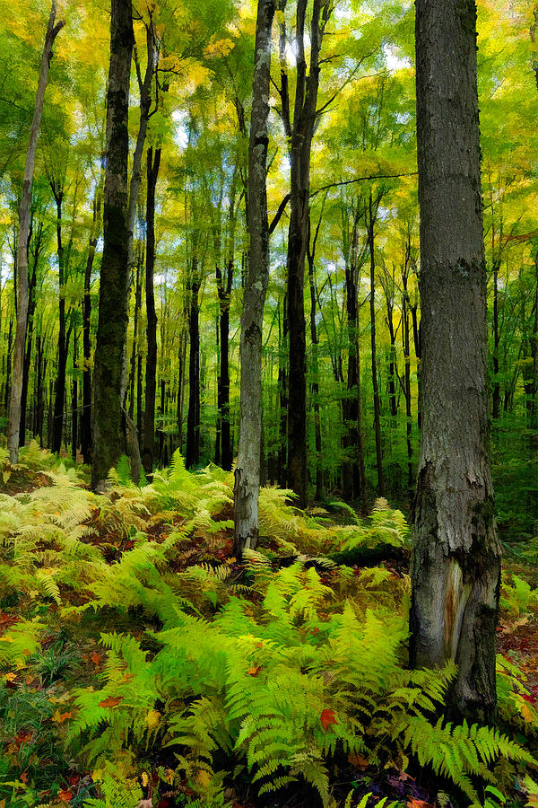 Ferns In The Forest - West Virginia Photograph