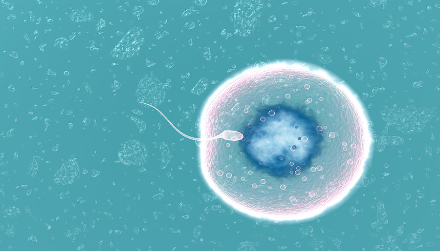 Fertilization Photograph