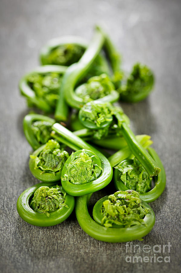 Fiddleheads Photograph