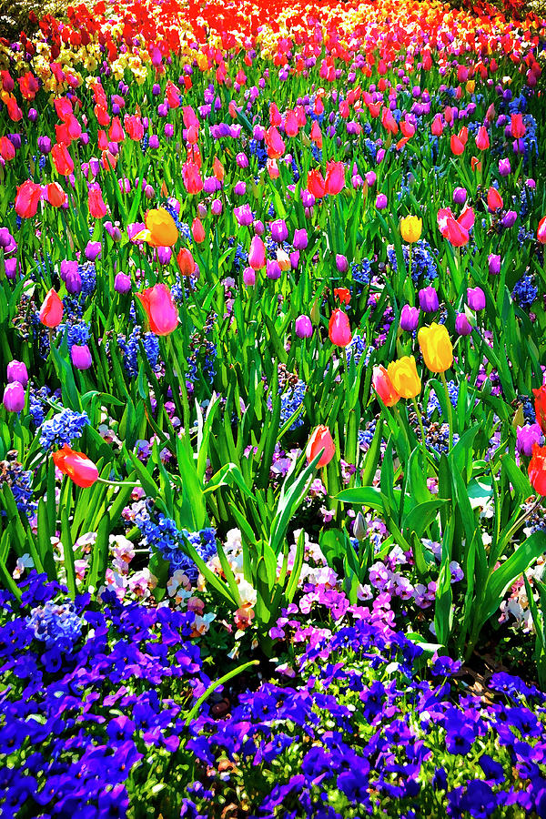 Field Of Flowers Photograph  - Field Of Flowers Fine Art Print