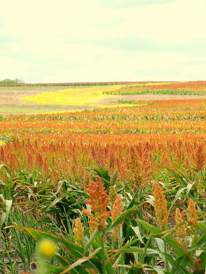 Field Of Gold Photograph