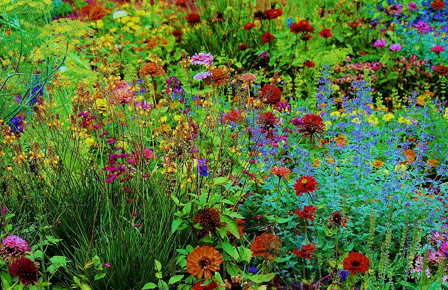Field Of Wild Flowers Photograph