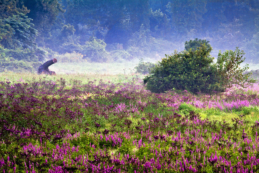 Field With Purple Flowers Photograph  - Field With Purple Flowers Fine Art Print