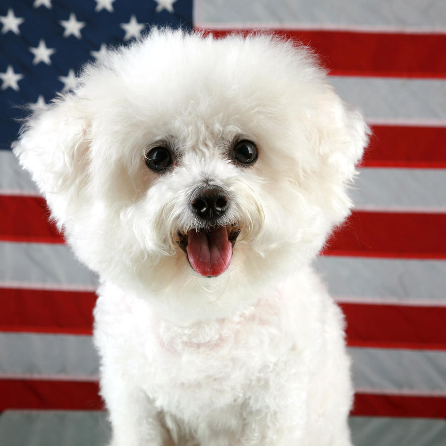 Fifi Loves America Photograph  - Fifi Loves America Fine Art Print