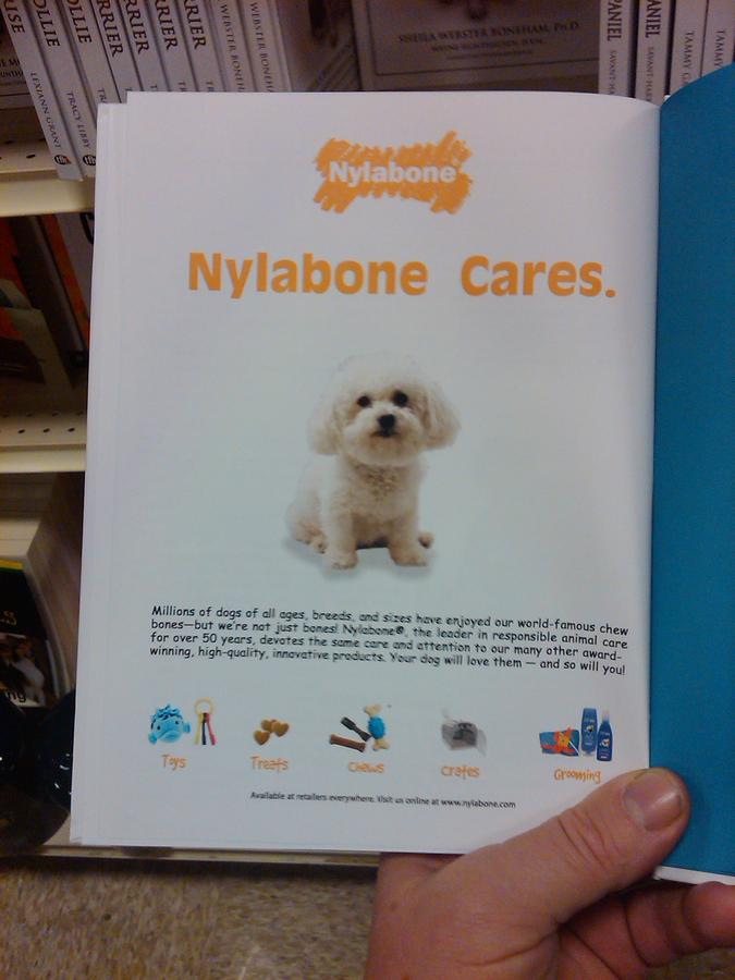 fifi the Bichon Frise in the back of a Dog Breed Book advertisment for Nylabone NOT FOR SALE Photograph
