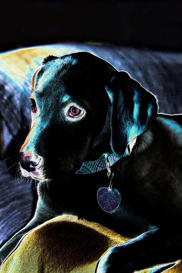 Fine Art Puppy Portrait Digital Art