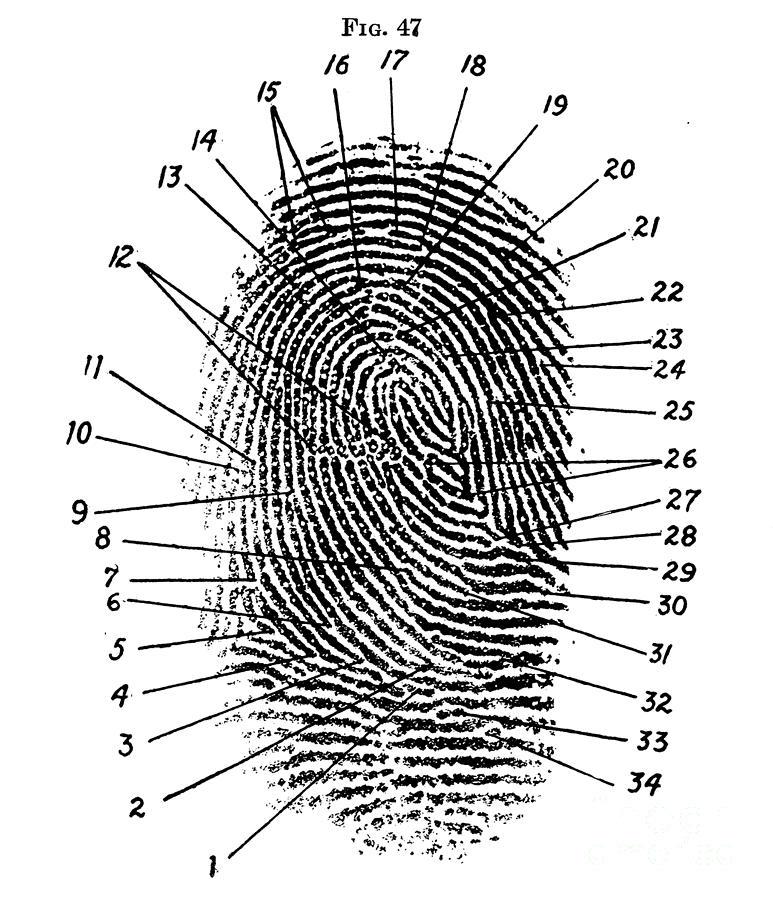 Fingerprint Diagram, 1940 Photograph