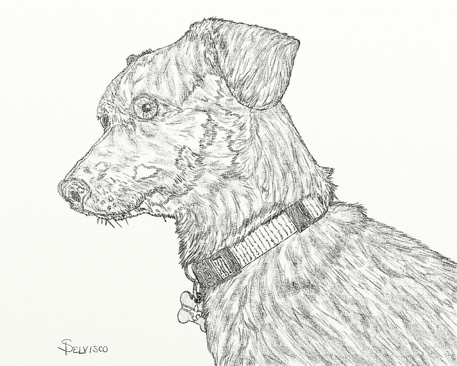 Finn In Black And White Digital Art  - Finn In Black And White Fine Art Print