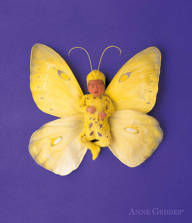 Fiona Butterfly Photograph
