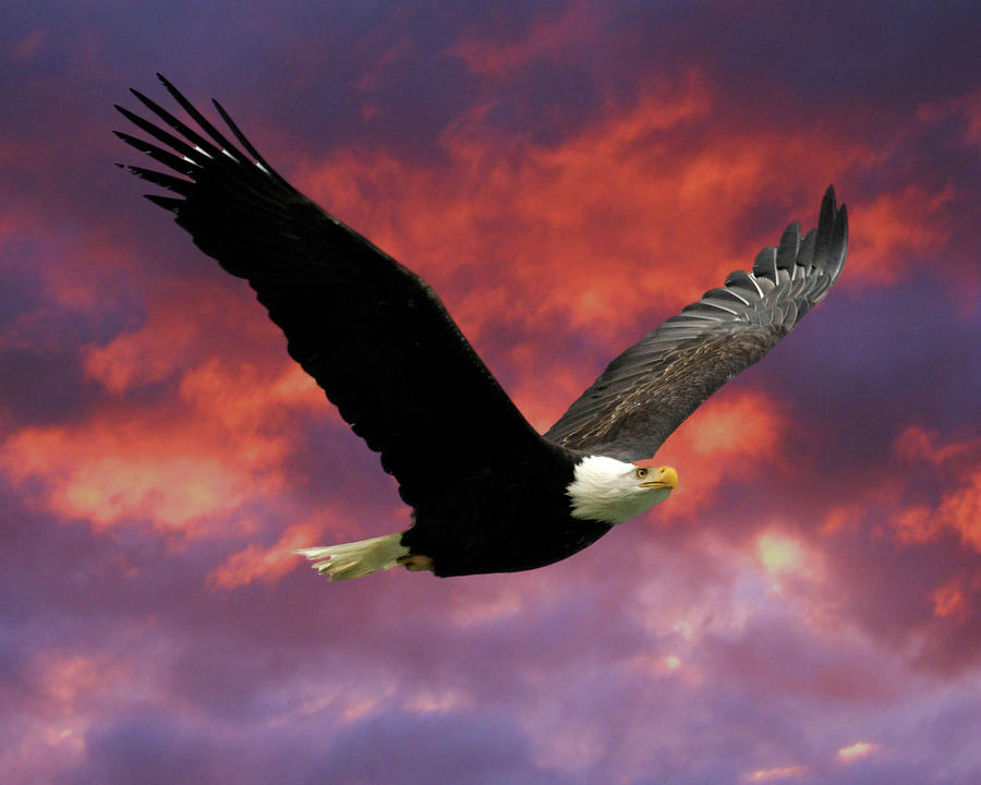 Fire Cloud And Eagle Photograph