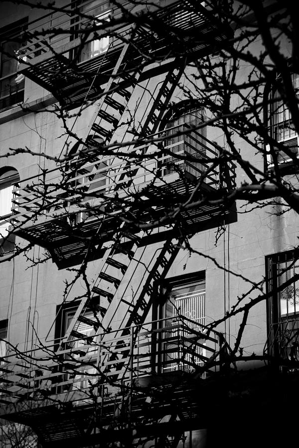 Fire Escape Tree Photograph  - Fire Escape Tree Fine Art Print