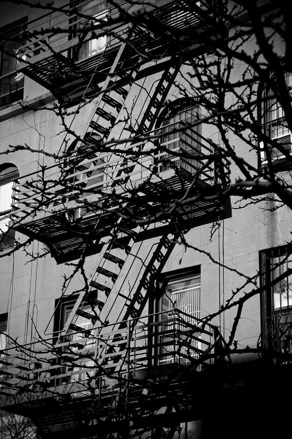 Fire Escape Tree Photograph