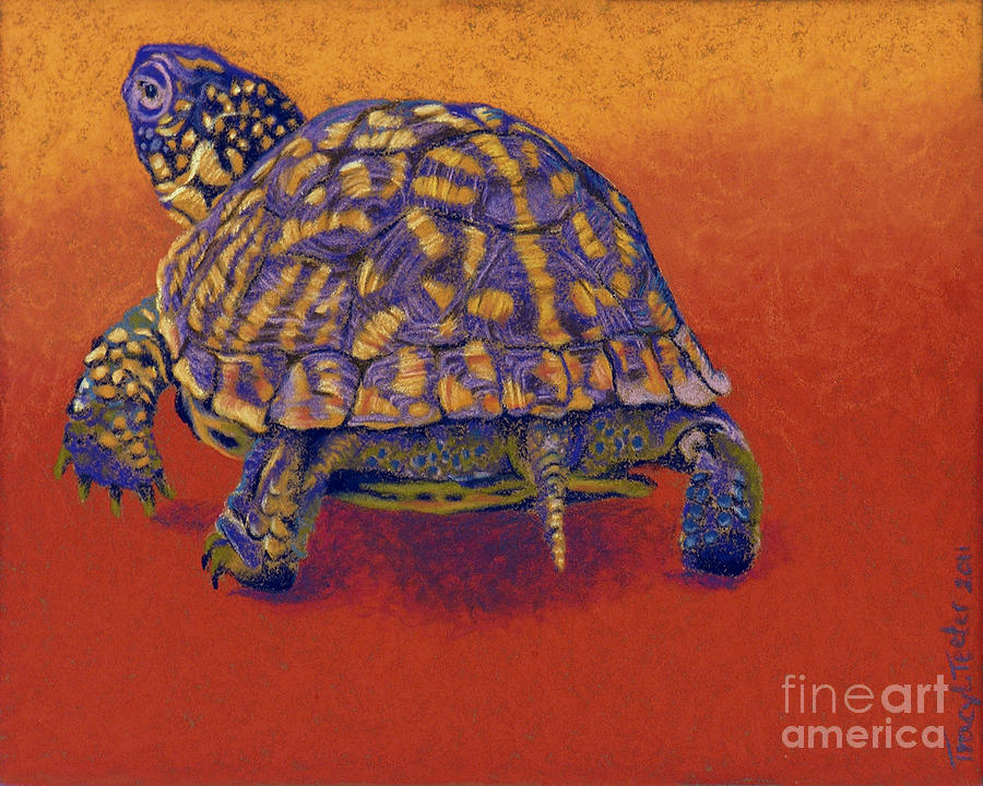 Fire Walker - Box Turtle Drawing  - Fire Walker - Box Turtle Fine Art Print