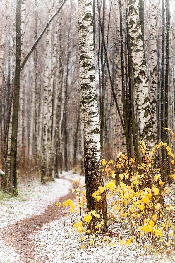 Snow Photograph - First Snow. Hidden Path by Jenny Rainbow