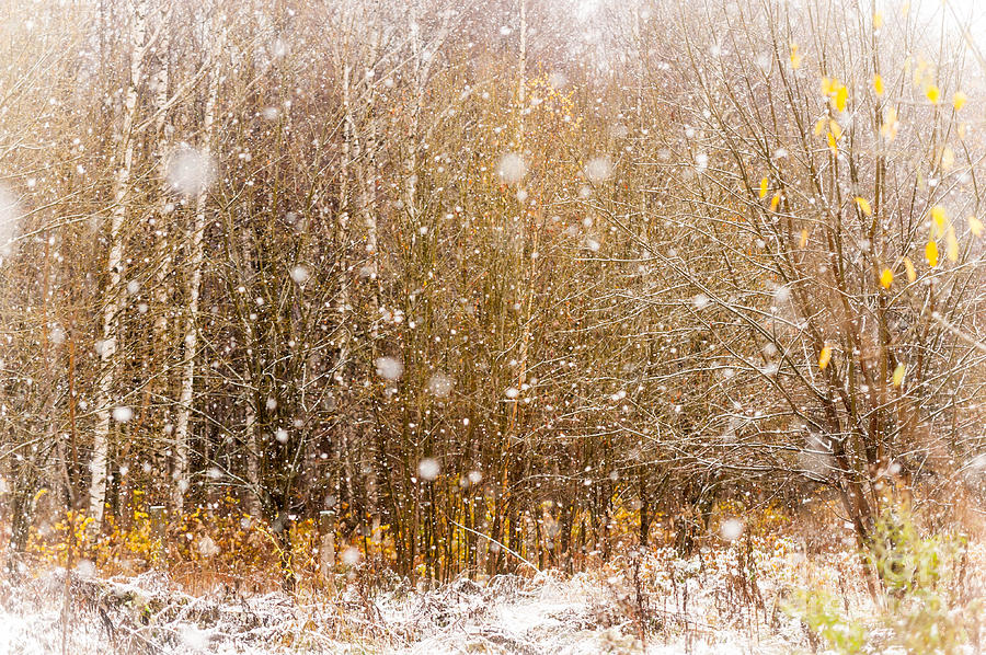 First Snow. Snow Flakes I Photograph  - First Snow. Snow Flakes I Fine Art Print