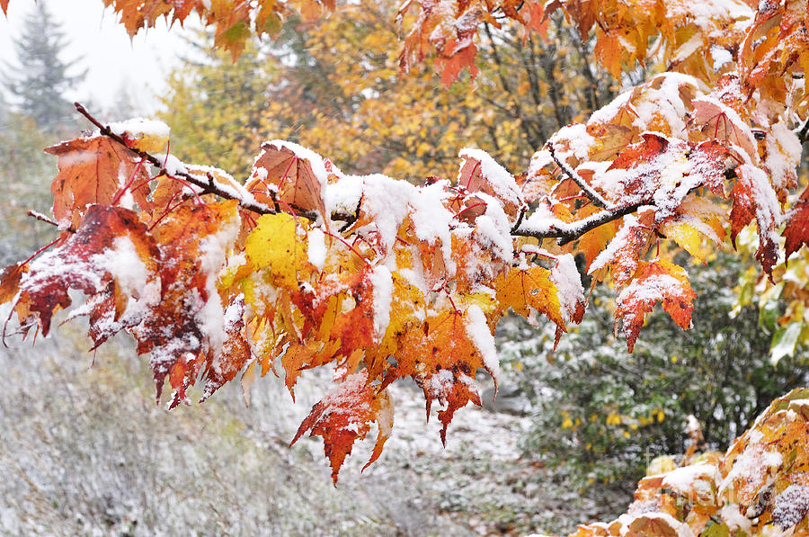 First Snow Photograph  - First Snow Fine Art Print