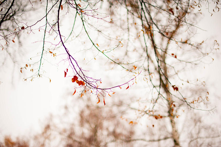 Snow Photograph - First Snow. Touch Of Gold by Jenny Rainbow