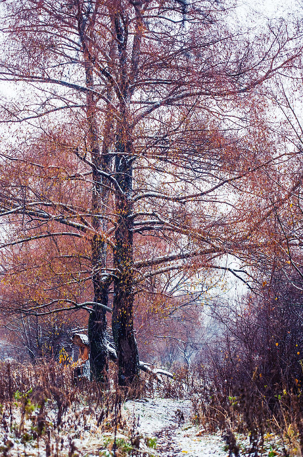 Snow Photograph - First Snow. Winter Coming by Jenny Rainbow